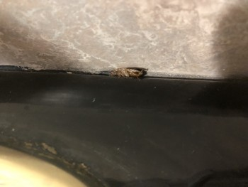 Plaza Suite Metairie, North Hullen Street, Metairie, LA, USA photo-157677 Got Food Poisoning? Report it now